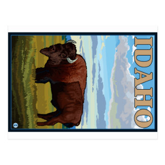 Bison Scene - Idaho Post Cards