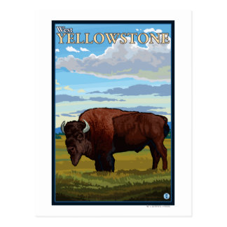 Bison Scene - West Yellowstone, Montana Postcards