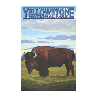 Bison Scene - Yellowstone National Park Gallery Wrap Canvas