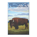 Bison Scene - Yellowstone National Park Canvas Print