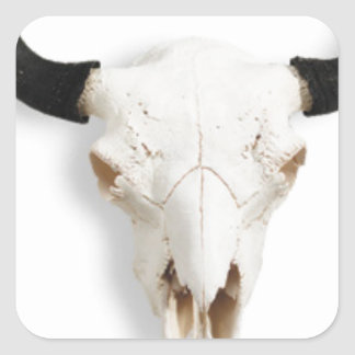 Bison Skull Collection Square Stickers