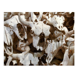 Bison skulls postcard