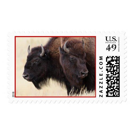 bison stamps