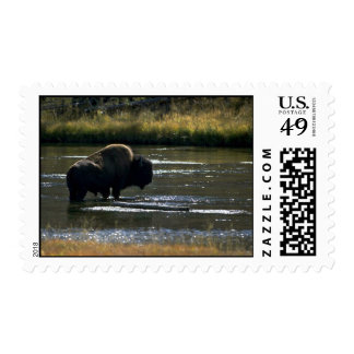 Bison Standing In River Postage