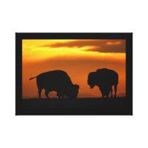 bison sunset canvas print