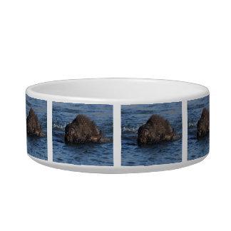 bison swimming bowl