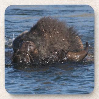 bison swimming drink coaster