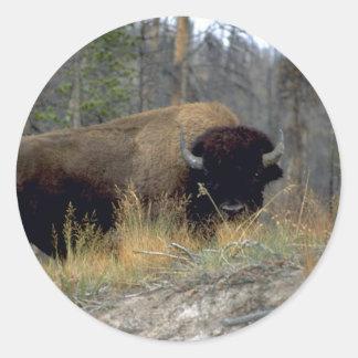 Bison, Upper Geyser Basin, Yellowstone National Pa Sticker