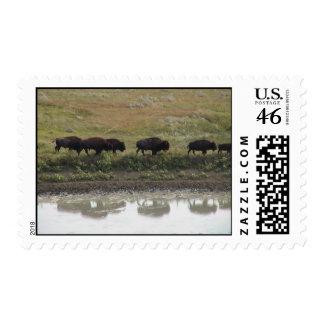 bison walk stamp