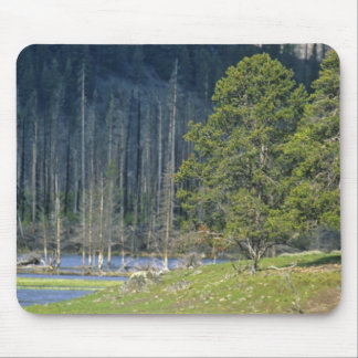 Bison with calf at Yellowstone National Park Mouse Pad