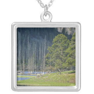 Bison with calf at Yellowstone National Park Square Pendant Necklace