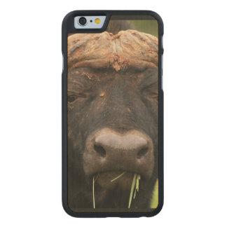 Bison Carved® Maple iPhone 6 Slim Case
