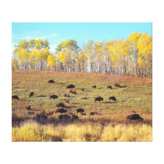 Bisonherde in the multicolored autumn on the canvas print