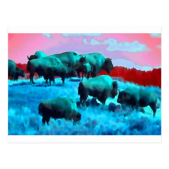 Bisons Postcard