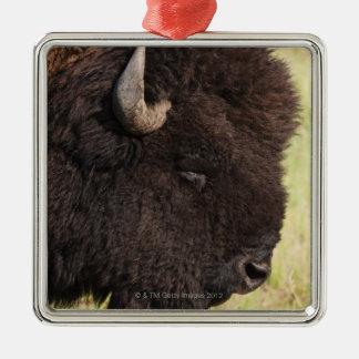 Bisonte americano, Dakota del Sur Ornamentos De Reyes