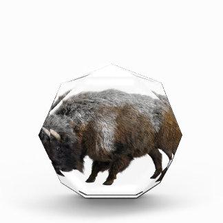 Bisonte americano en invierno