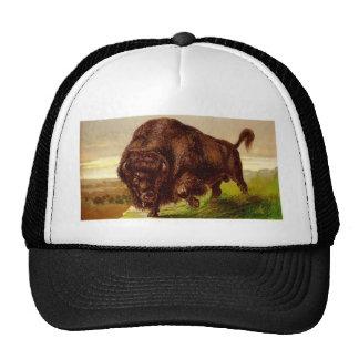 Bisonte americano gorras de camionero