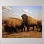 bisonte americano poster