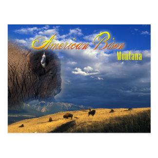 Bisonte americano que pasta en Montana Tarjetas Postales