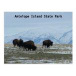 Bisonte americano tarjeta postal