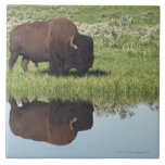 Bisonte (bisonte del bisonte) en prado herboso azulejo cerámica