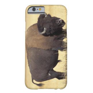 bisonte, bisonte del bisonte, toro en el nacional funda de iPhone 6 barely there