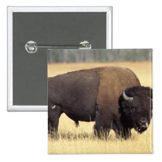 bisonte, bisonte del bisonte, toro en el nacional  pin cuadrada 5 cm