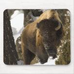 Bisonte Bull de Yellowstone en el invierno - modif Tapetes De Ratones