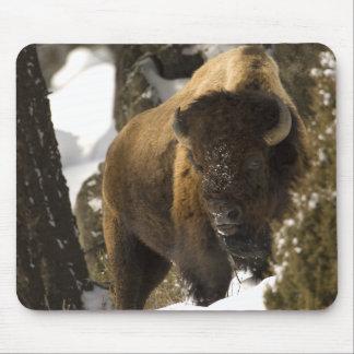 Bisonte Bull de Yellowstone en el invierno - modif Alfombrillas De Raton