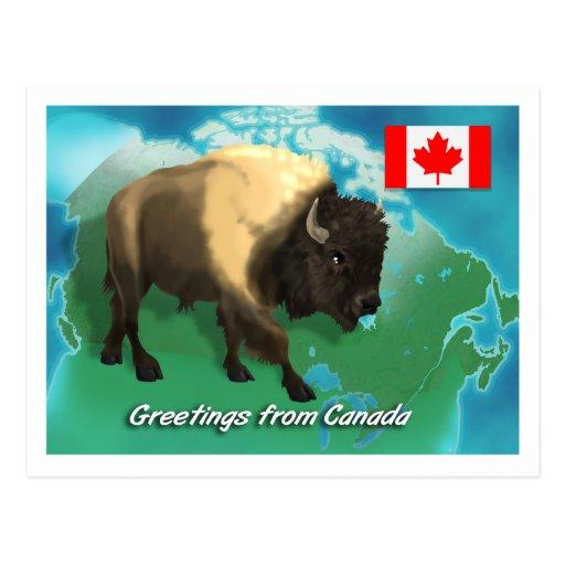 Bisonte canadiense tarjetas postales