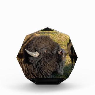 Bisonte de Bull