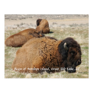 Bisonte de la isla del antílope postales