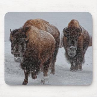 Bisonte de Yellowstone Alfombrillas De Ratones