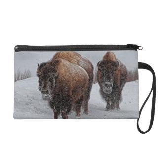 Bisonte de Yellowstone