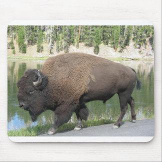 Bisonte de Yellowstone Tapetes De Ratón