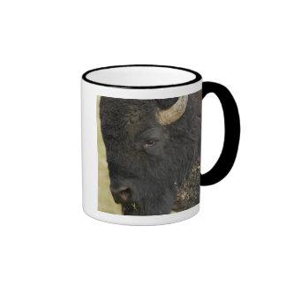 """Bisonte del bisonte del """"búfalo"""" del bisonte ameri tazas de café"""
