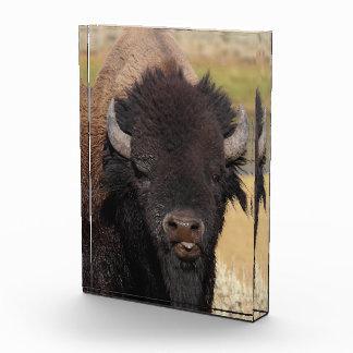 bisonte divertido