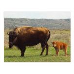 Bisonte en Dakota del Norte Tarjeta Postal