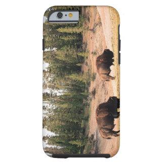 Bisonte en el parque nacional de Yellowstone, Funda Para iPhone 6 Tough