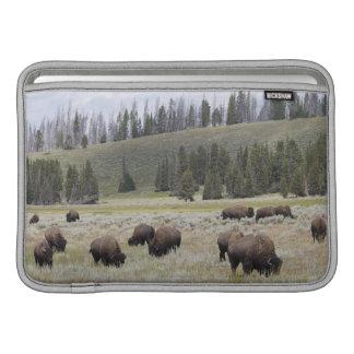 Bisonte en el valle de Hayden de Yellowstone Funda Macbook Air