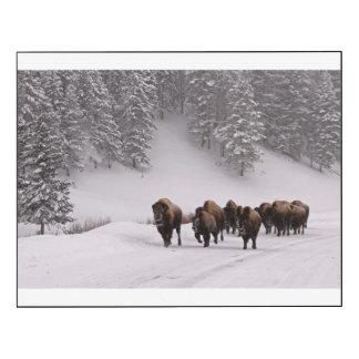 Bisonte en invierno impresión en madera