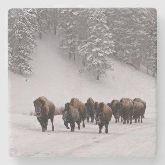 Bisonte en invierno posavasos de piedra
