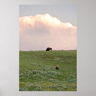 Bisonte en Yellowstone Impresiones