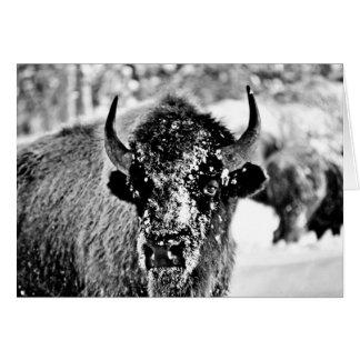 Bisonte escarchado de Yellowstone Tarjeta De Felicitación