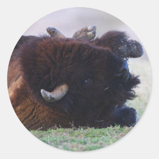 bisonte pegatina redonda