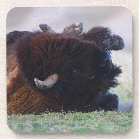 bisonte posavaso