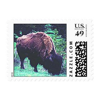 bisonte envio