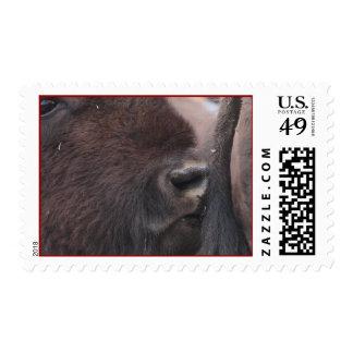 bisonte franqueo