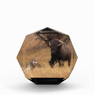 Bisonte y lobo de Bull