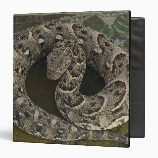 """Bitis africano de la Soplo-serpiente del Carpeta 1 1/2"""""""